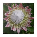 Big Pink and White Flower Nature Floral Tile