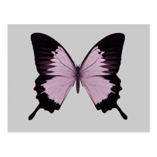 Big Pink & Black Butterfly - Personalize Postcards