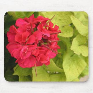 Big pink geranium flower blossom up close photo mouse pads