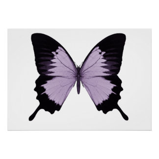 Big Purple & Black Butterfly Poster