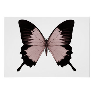 Big Red & Black Butterfly Poster