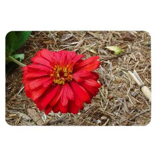 Big Red Flower Magnet