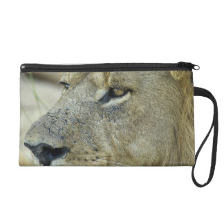 Big Red is a magnificent male Lion Wristlet Purses