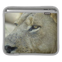 Big Red is a magnificent male Lion iPad Sleeve