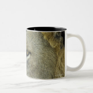 Big Red is a magnificent male Lion residing in Two-Tone Coffee Mug