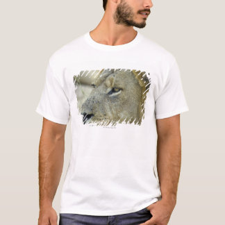 Big Red is a magnificent male Lion T-Shirt