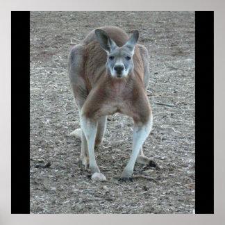 Big Red Kangaroo Print