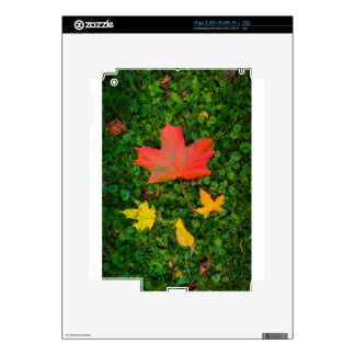 Big Red Maple Leaf 2 Skin For iPad 2