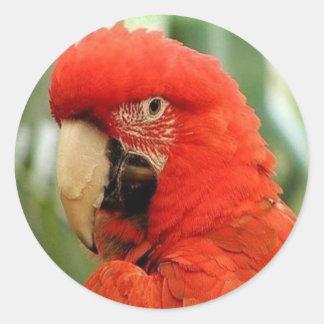 Big Red Parrot Classic Round Sticker