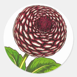 Big Red / Purple Dahlia Vintage Van Houtte Print Classic Round Sticker