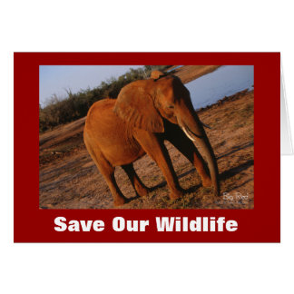 Big Red Save Our Wildlife Greeting Card