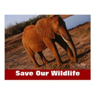 Big Red Save Our Wildlife Postcard