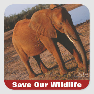 Big Red Save Our Wildlife Square Sticker