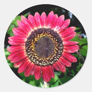 Big Red Sunflower Classic Round Sticker