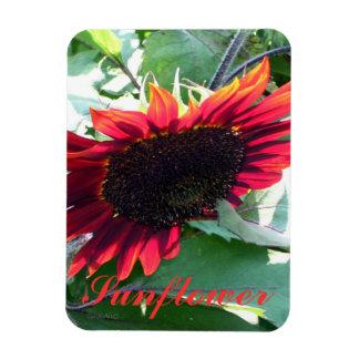 Big Red Sunflower Magnet