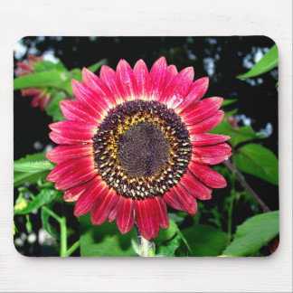 Big Red Sunflower Mouse Pad
