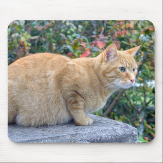 Big Red Tabby Mousepads