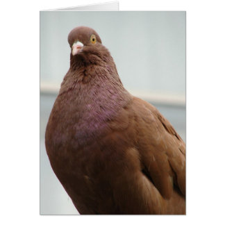 Big Red the Modena Pigeon Card