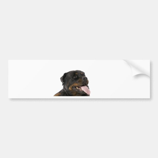 big rottweiler bumper sticker