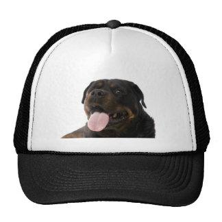 big rottweiler trucker hat