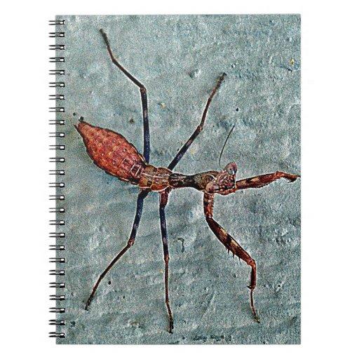 book of ra bug