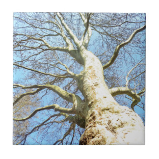 Big Sunny Tree Branches in Heavenly Blue Sky Ceramic Tile