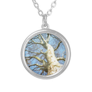 Big Sunny Tree Branches in Heavenly Blue Sky Round Pendant Necklace