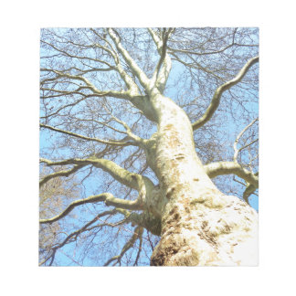 Big Sunny Tree Branches in Heavenly Blue Sky Notepad