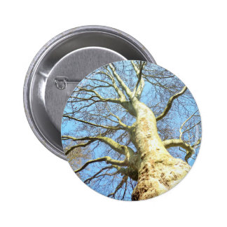 Big Sunny Tree Branches in Heavenly Blue Sky Pinback Button