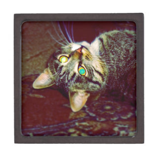 Big Tabby Cat 3 Gift Box
