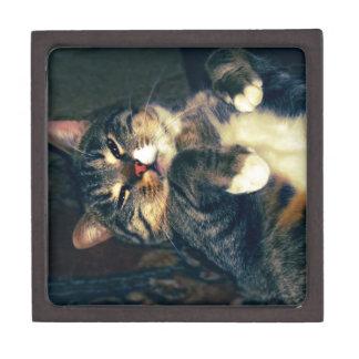 Big Tabby Cat 4 Keepsake Box