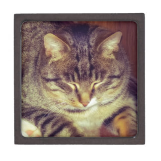 Big Tabby Cat 5 Gift Box