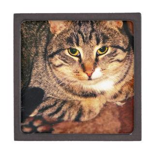 Big Tabby Cat 6 Jewelry Box