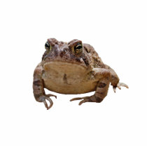 Big Toad Cutout