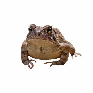 Big Toad Photo Sculpture Button