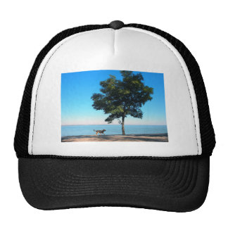 Big tree and the walking path along the lake shore trucker hat