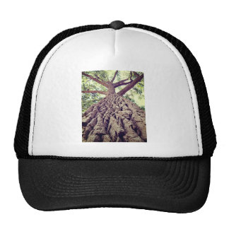 Big Tree Bark Trucker Hat