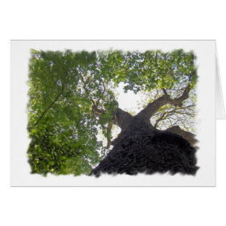 Big Tree Greeting Card