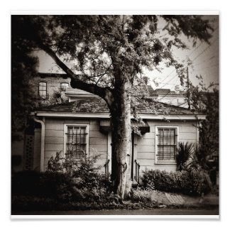 Big Tree/Little House Photo Print