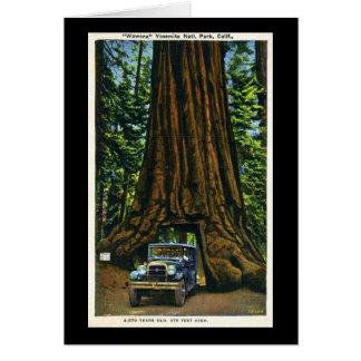 Big Tree Wawona, Mariposa Grove, CA Card