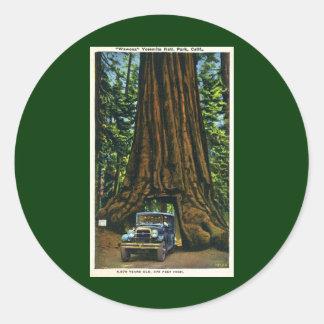 Big Tree Wawona, Mariposa Grove, CA Classic Round Sticker