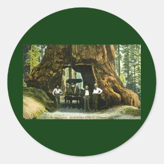 Big Tree Wawona, Mariposa Grove, CA Vintage Classic Round Sticker
