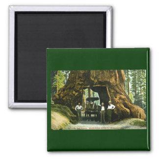 Big Tree Wawona, Mariposa Grove, CA Vintage Magnet