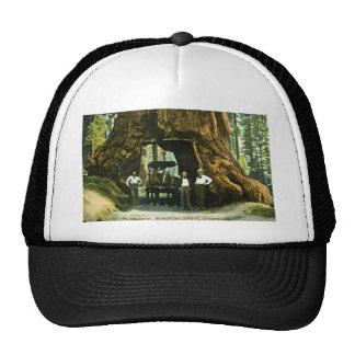 Big Tree Wawona, Mariposa Grove, CA Vintage Trucker Hat