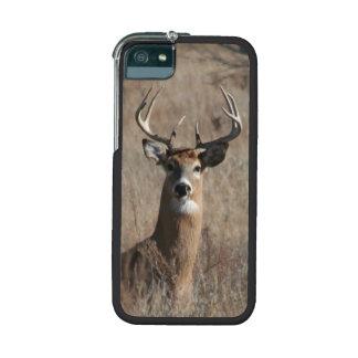 Big Trophy Buck Deer Camo iPhone 5/5S Case