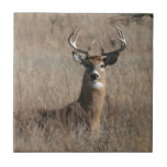 "Big Trophy Buck Deer in Tall Grass Camo Ceramic Tile<br><div class=""desc"">Big Trophy Buck in Tall Grass Camo</div>"