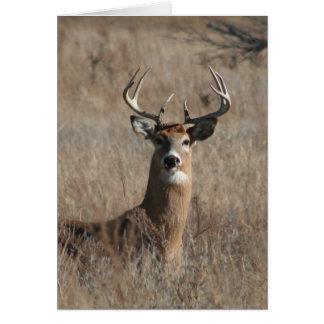 Big Trophy Buck Deer in Tall Grass Greeting Card