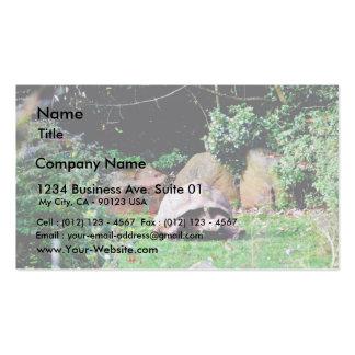 Big Turtle Business Card Templates