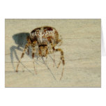 Big, Very, Scary, Hairy Spider Greeting Cards