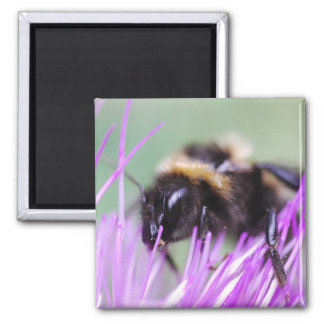 Big wasp magnet